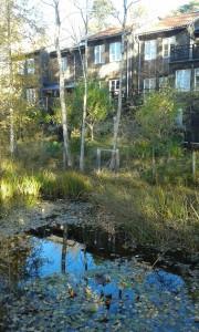 En av ecobyns dammar. Foto: AnnVixen