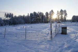 Under snötäcket väntar Flurlundargårds odlingar på att ta fart. Foto: Agata Mazgaj