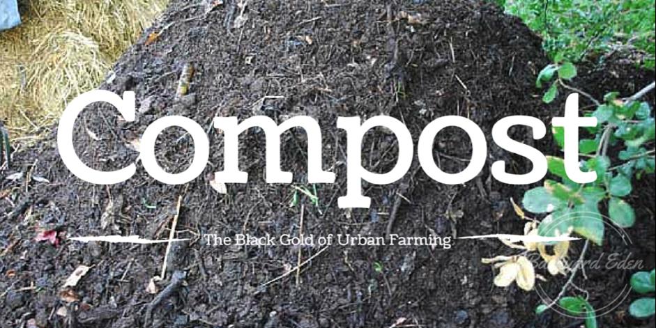 Komposten: Den urbana odlingens svarta guld
