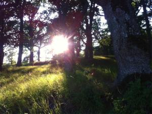 Komposten är en av Jordens mest naturliga processer. Foto: AnnVixen