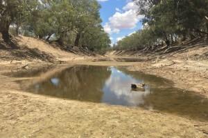 River Darling under en av de allt längre torrperioderna. Foto: SPA