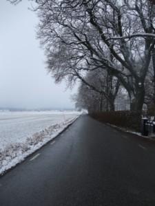 De Västmanländska slätterna. Foto: AnnVixen