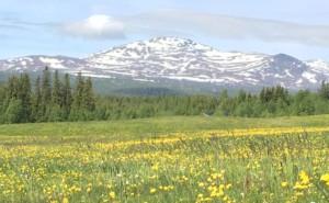 Det är juni och vår har kommit. Utsikten från Fäviken är makalöls. Foto: AnnVixen TellusThinkTank.se