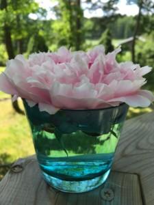 Använd hellre glas och keramik än plast... Foto: AnnVixen
