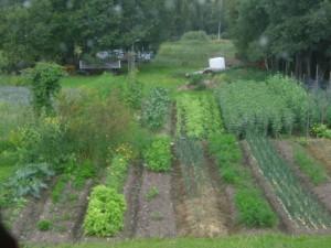 Den prunkande sjävhushållande odlingen. Foto: Zoe Elims